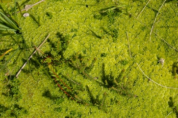Moss. Luscious in the wild, not so keen on it in my lawn.