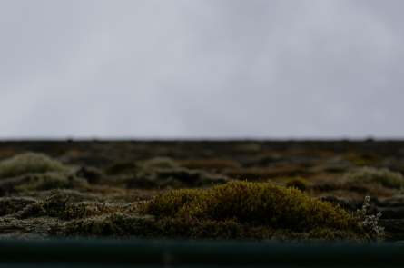 Lichen on the slate roof of a cottage.