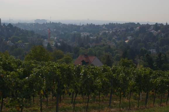 This picture shows you how close to the City centre the vineyards are. The spire of the Stephansdom is upper left.