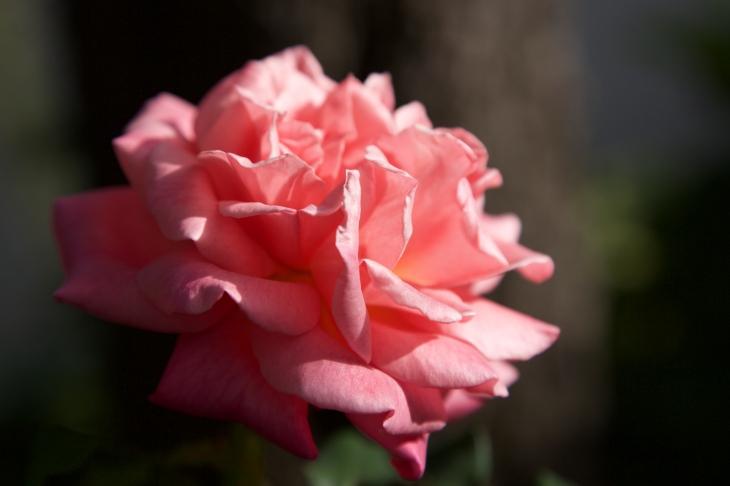 roses0715